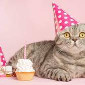 Por realizar fiesta a felino, se contagian de Covid-19