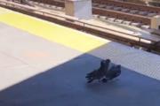 Palomas asesinan a su 'amiga' empujándola a las vías del tren