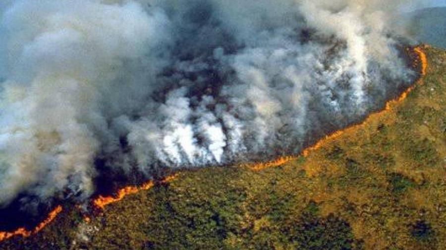 Fauna en Brasil se ve amenazada ante incendios forestales