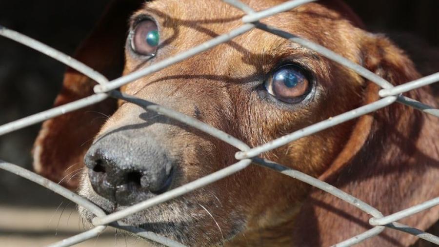 Encuentran animales domésticos sin vida en un lote en China