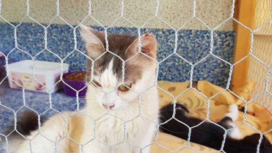 Por pandemia, aumenta el número de gatos abandonados en Chipre