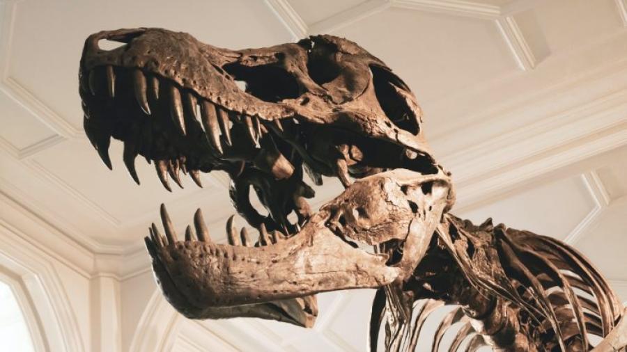 Hallan al antepasado más antiguo del Tiranosaurio Rex