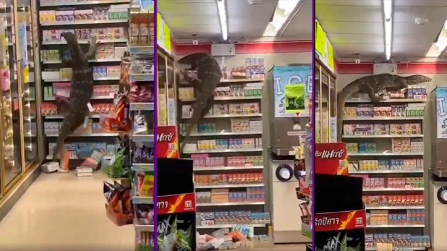 Gigantesco lagarto desata el pánico en Tailandia