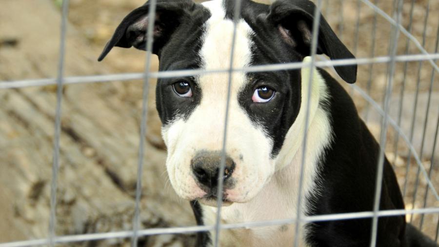 Tres individuos presentan cargos por maltrato animal en Condado Cameron
