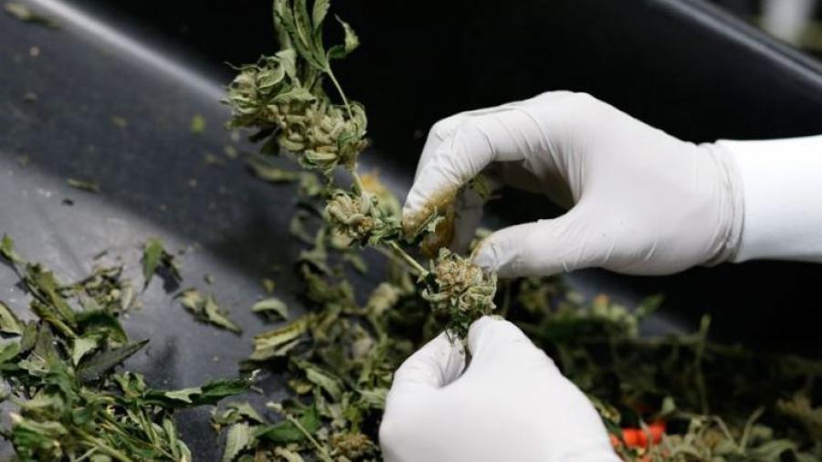 Conoce aquí qué permite y qué prohíbe la despenalización de la marihuana