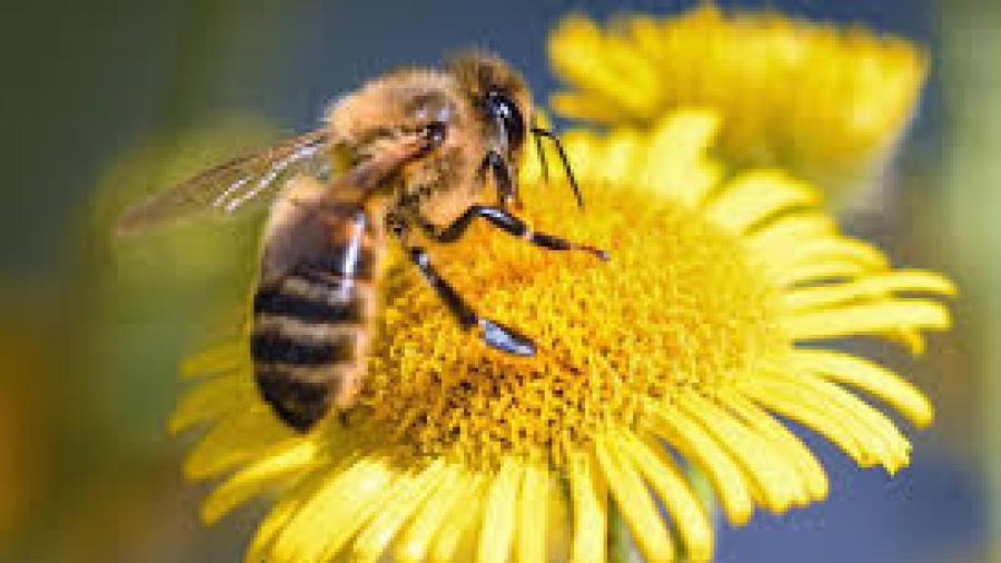 Bomberos en McAllen responden a ataques por un enjambre de abejas