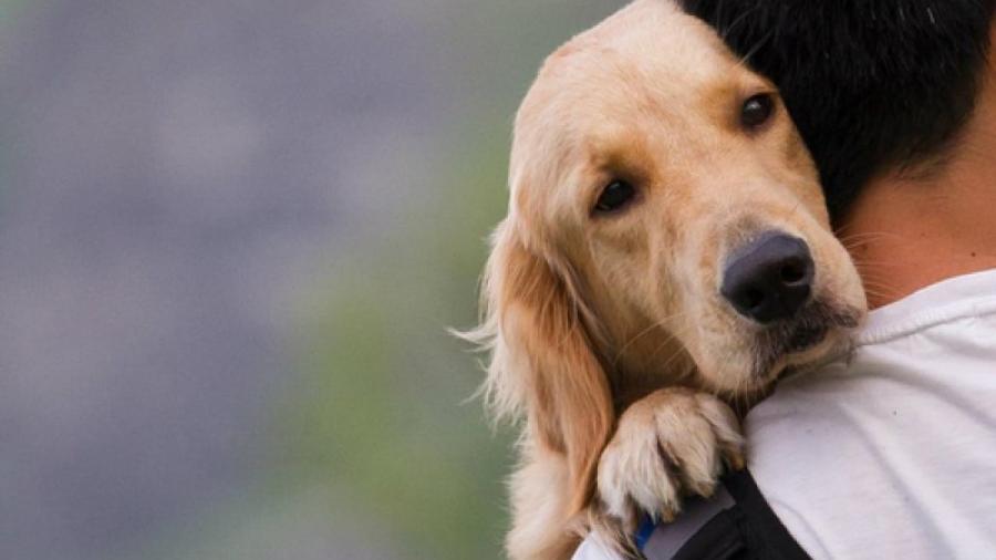 Estudio indica que los perros no sienten amor por sus amos