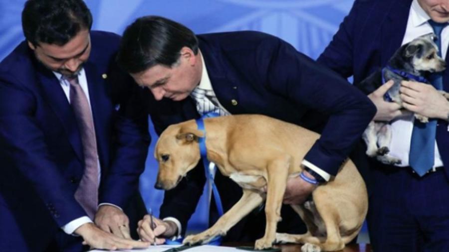 Aumentan en Brasil las penas por maltrato animal