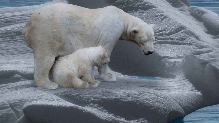 Prevé ONU aumento de temperatura entre 2020 y 2024